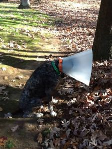 BB with cone